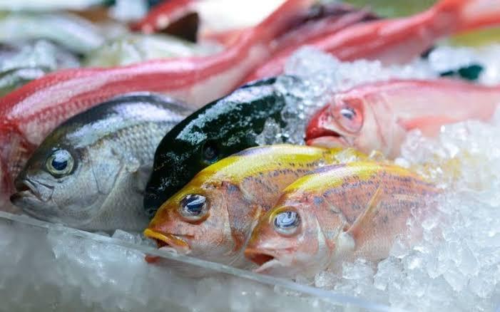 Bisnis Ikan Laut Beku Sukses Go Internasional