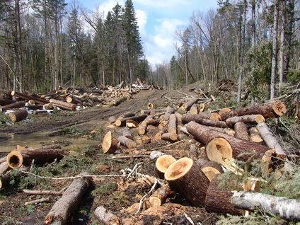 Bumi Tanpa Pohon, Apa Jadinya?